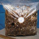 Мицелий грибов, субстраты, почтовая рассылка