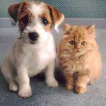 Стрижка собак и кошек.Выезд.